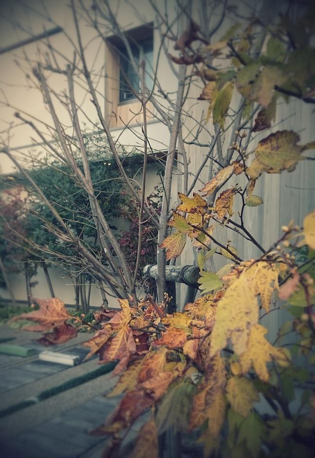 気持ちのいい木の家|愛知県安城市 暮らしのお店紅葉の季節