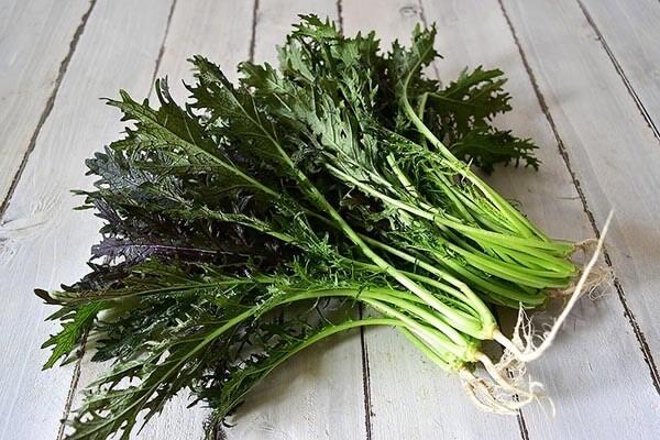 野菜の紹介です
