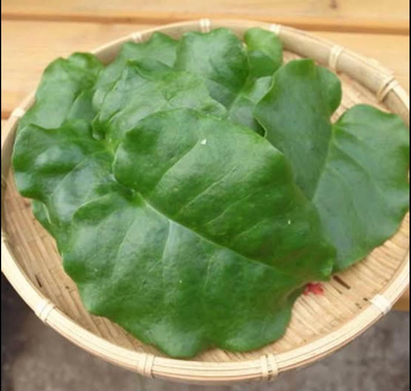野菜がおいしいごはん|愛知県安城市 暮らしのお店野菜の紹介です【おかわかめ】