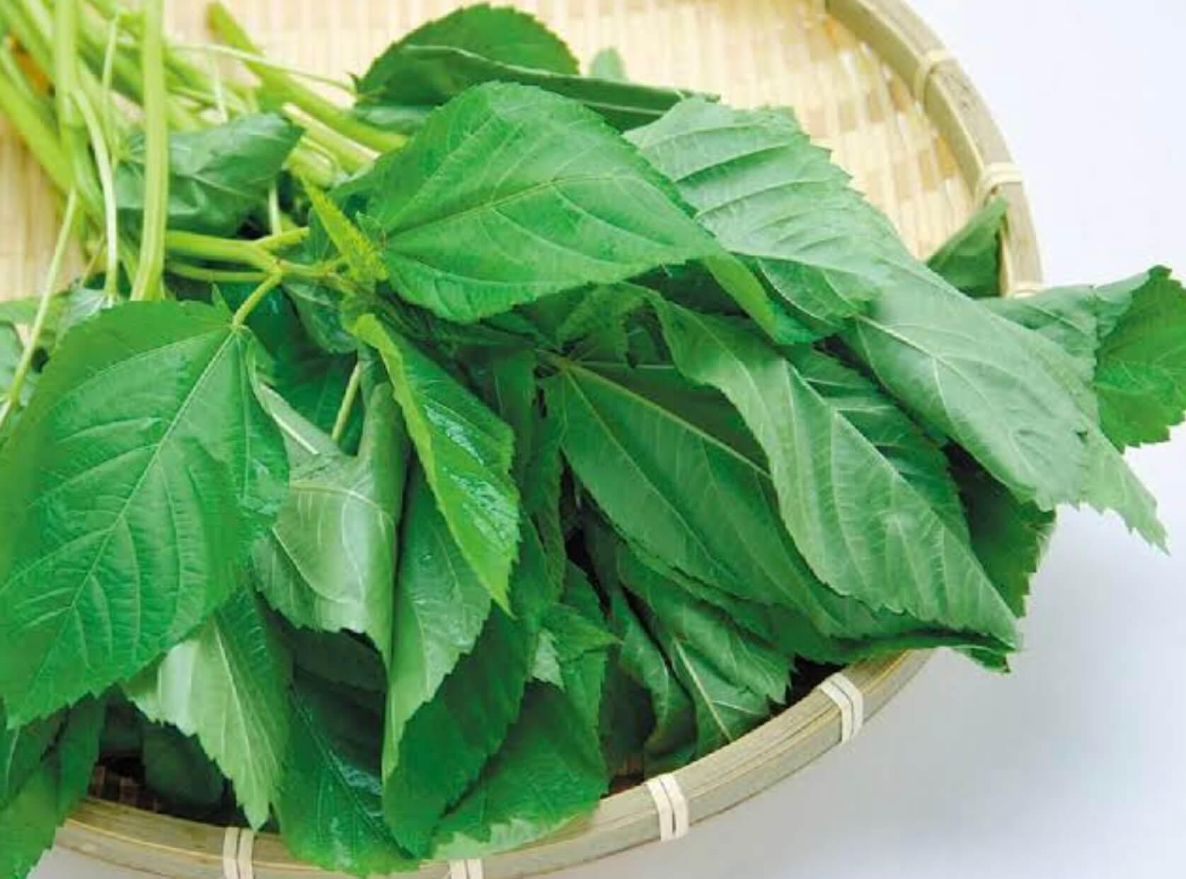 野菜の紹介です【ビーツ】|野菜がおいしいごはん|愛知県安城市 暮らしのお店野菜の紹介です【モロヘイヤ】