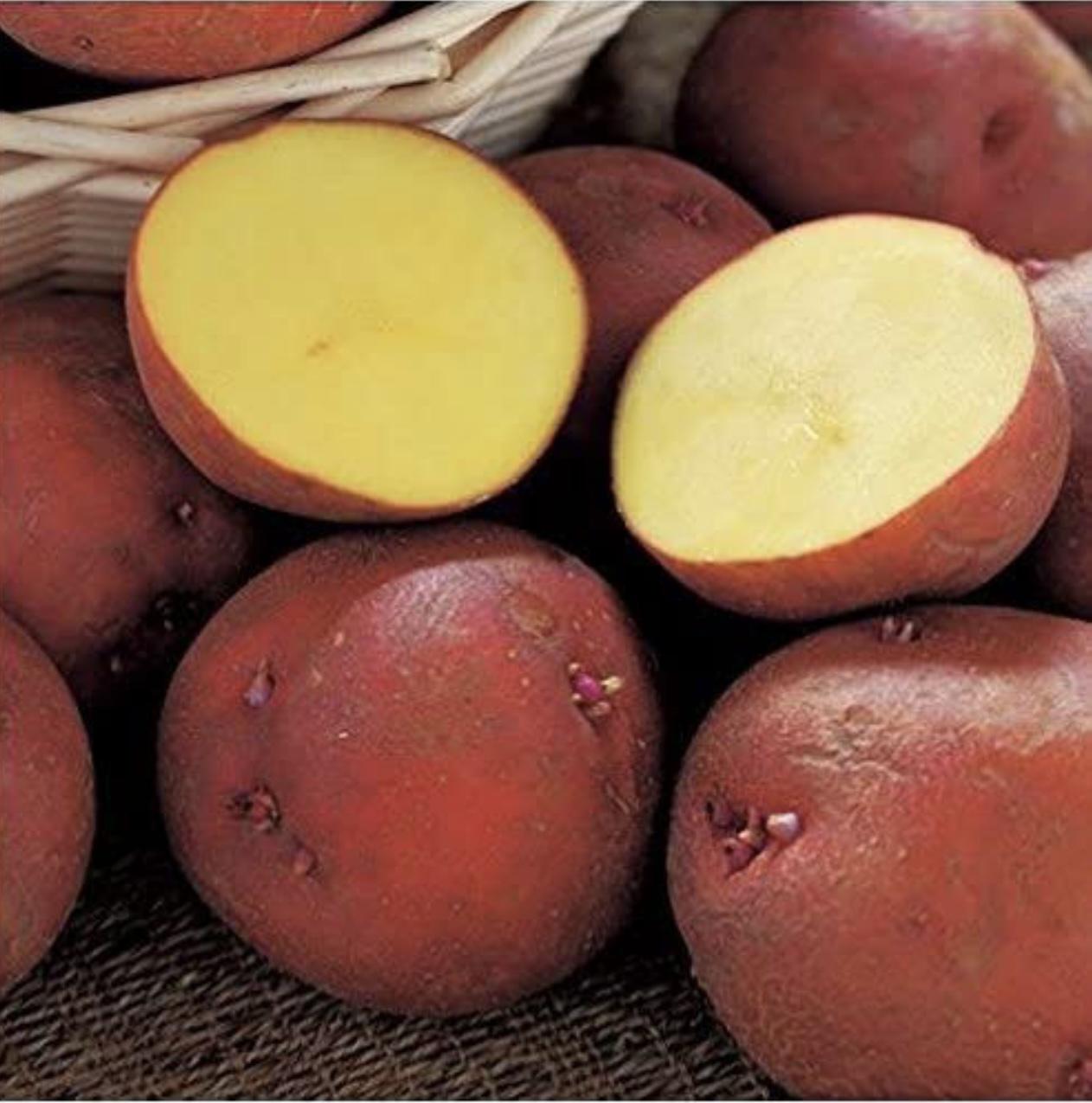 野菜の紹介です【ビーツ】|野菜がおいしいごはん|愛知県安城市 暮らしのお店野菜の紹介です【アンデス】